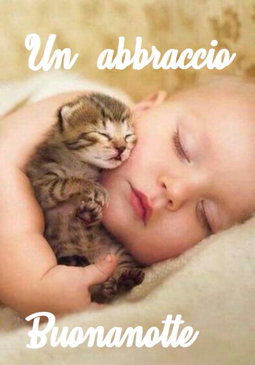 Immagini Divertenti Buonanotte Gatti