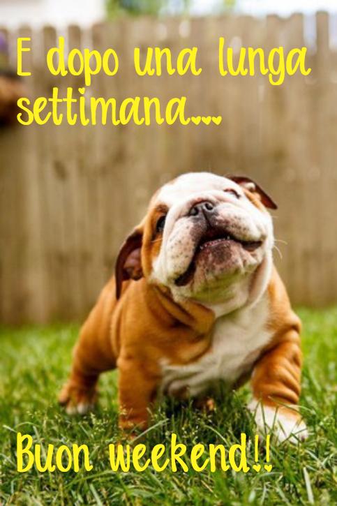 I SALUTI DI GENNAIO 2019 - Pagina 5 Buon_fine_settimana_weekend_domenica_animali_simpatici_carini_divertenti_1536911773