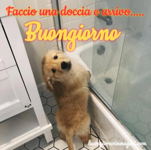 Le immagini del buongiorno piu belle gratis e sempre - Bagno cane dopo antipulci ...