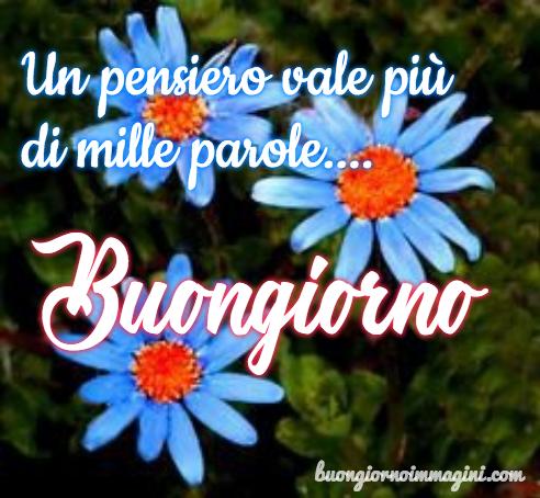 Fiore margherita azzurra prato foto nove gratis for Foto buongiorno gratis