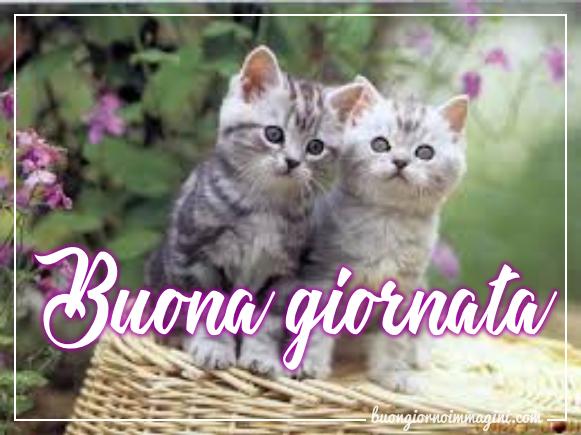 Le immagini del buongiorno piu belle gratis e sempre for Buongiorno con gattini