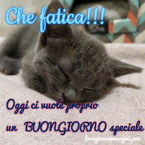 Gattino Tenero Dolce Morbido Immagine Foto Nuova