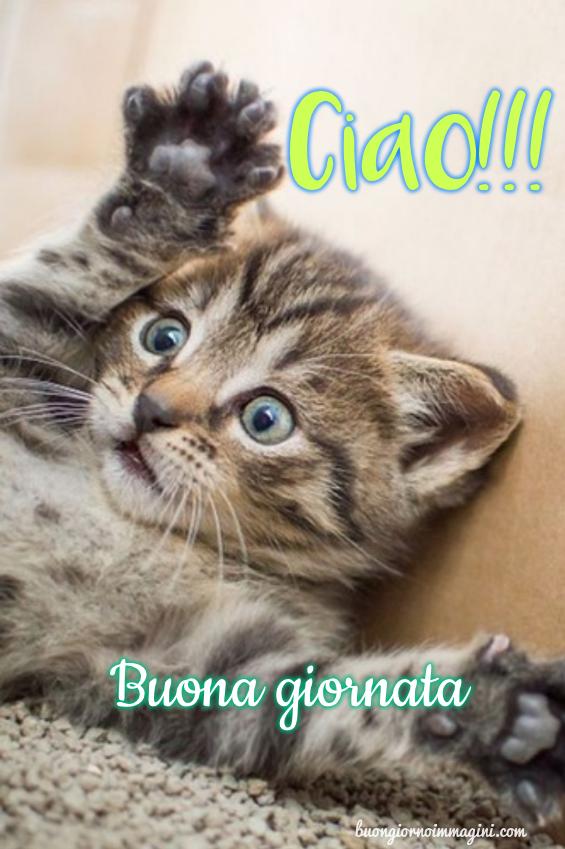 Gattino tenero saluta ciao buona giornata for Buongiorno con gattini